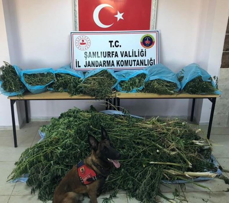 Urfa'da uyuşturucu operasyonu: 1 gözaltı